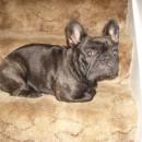 Bonnie 1 year old