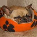 Tanzie's nap time