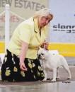 "Borat at ""Nanaimo Kennel Club"" Dog Show"