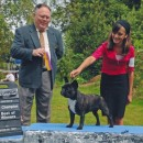 Ch AmberBull Constance Bonacieux and Anastasia at Pacific Kennel Club Show