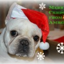 Happy Holidays from AmberBull!