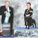 AmberBull Brock'N'Roll, Best Puppy in Show