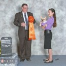 AmberBull In It To Win It, aka Tia, Best Baby Puppy in Show