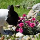 GiGi Smelling the flowers