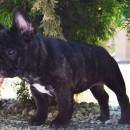 Maila 11 weeks
