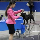 Maila at a dog show