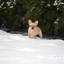 Tia's First Snow