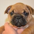 Bubba 6 weeks