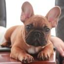 Bubba as a puppy