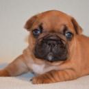 Bubba 3.5 weeks
