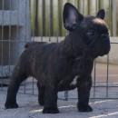 Foz E as a puppy